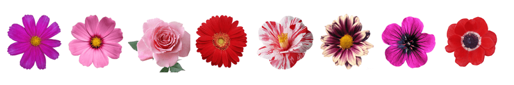 Цветы в цикле