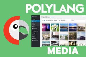 polylang-media-translate
